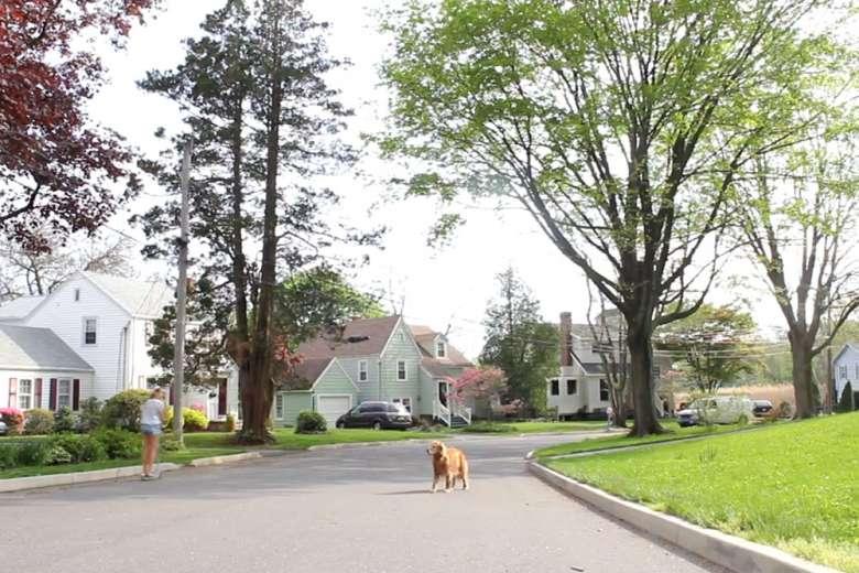 ドローンが犬の散歩