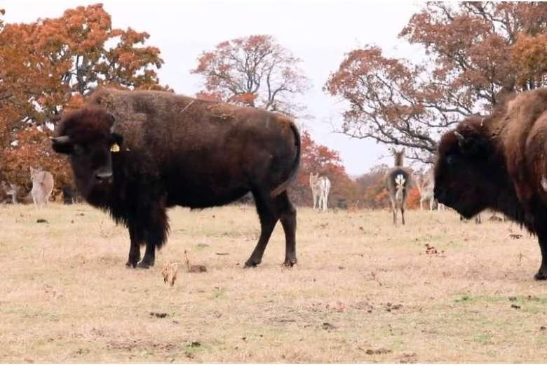 紅葉したオクラホマ州のウーラロック博物館周辺と動物保護区を空撮